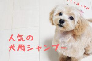 犬用シャンプー人気